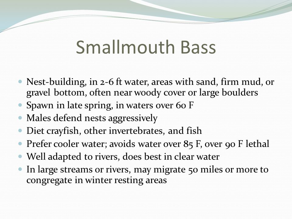 Smallmouth Bass Nest-building, in 2-6 ft water, areas with sand, firm mud, or gravel bottom, often near woody cover or large boulders Spawn in late spring, in waters over 60 F Males defend nests aggressively Diet crayfish, other invertebrates, and fish Prefer cooler water; avoids water over 85 F, over 90 F lethal Well adapted to rivers, does best in clear water In large streams or rivers, may migrate 50 miles or more to congregate in winter resting areas