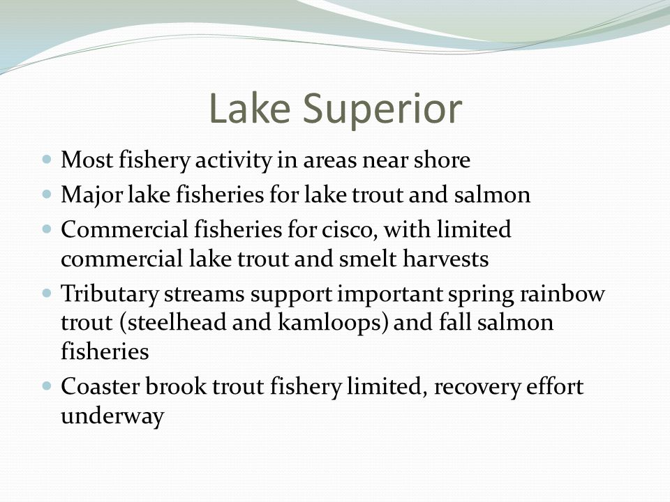 Lake Superior Most fishery activity in areas near shore Major lake fisheries for lake trout and salmon Commercial fisheries for cisco, with limited commercial lake trout and smelt harvests Tributary streams support important spring rainbow trout (steelhead and kamloops) and fall salmon fisheries Coaster brook trout fishery limited, recovery effort underway