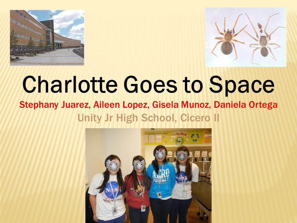 Can a spider egg survive in microgravity .Will a spider's egg hatch in a microgravity setting .
