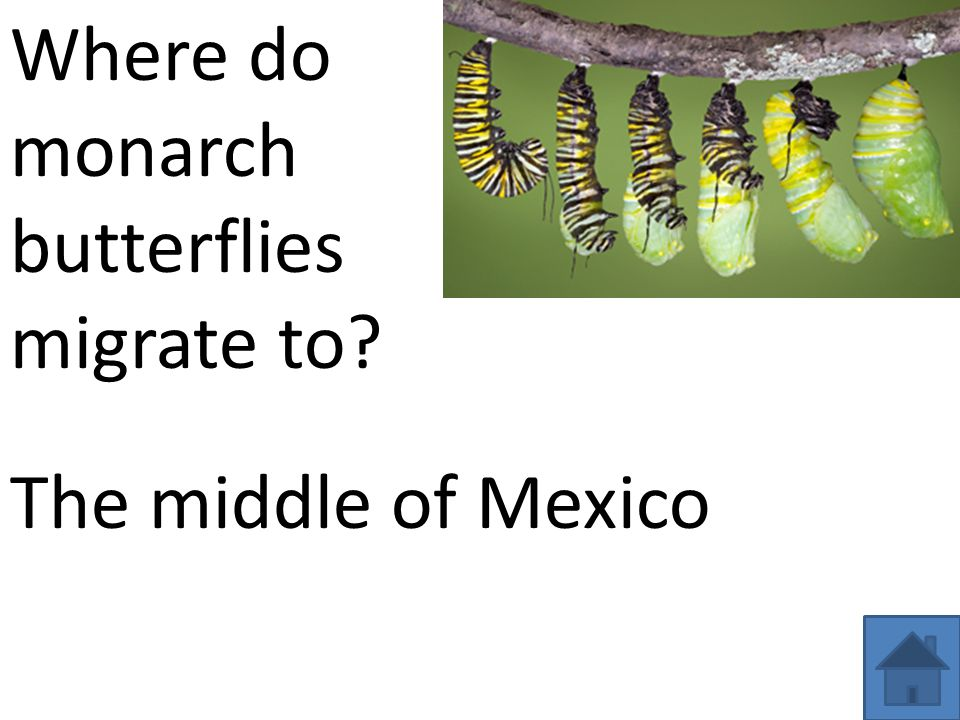 Where do monarch butterflies migrate to? The middle of Mexico