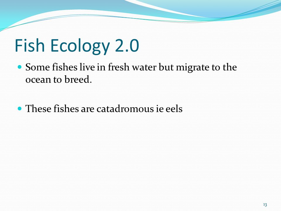 Fish Ecology 2.0 Some fishes live in fresh water but migrate to the ocean to breed. These fishes are catadromous ie eels 13