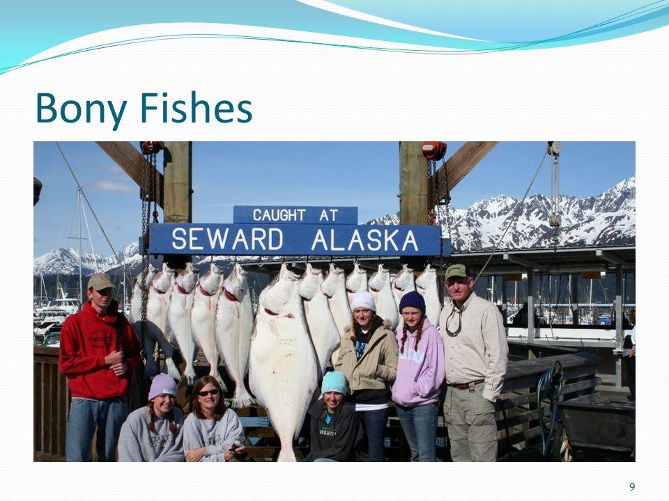 Bony Fishes 9