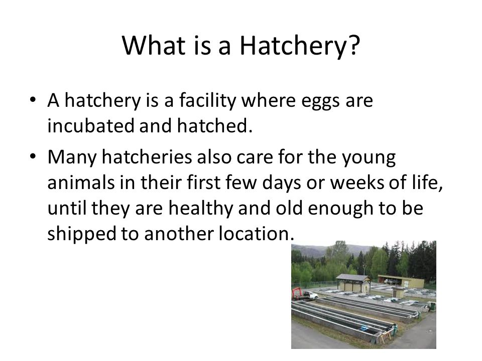 Purpose of hatchery There are several different types of hatchery in use around the world, and hatcheries may be established for numerous purposes, ranging from conservation to a need to create a stable food supply.