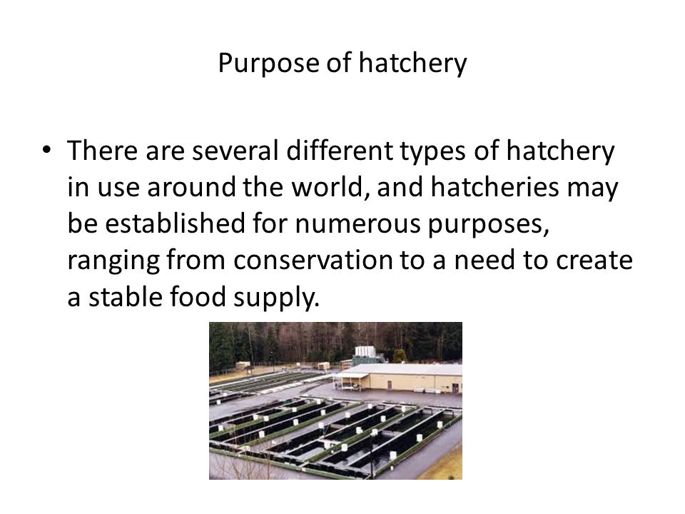 Some hatcheries handle fish such as salmon.