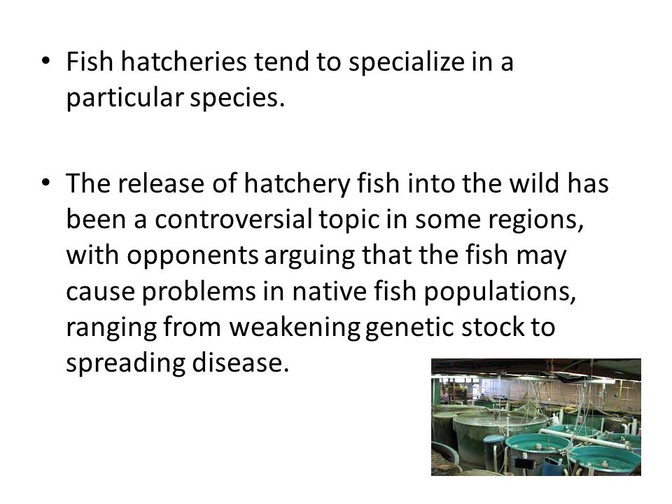 Water environments that may be adequate for adult fish may not be sufficient for breeding, fish eggs and hatchlings.