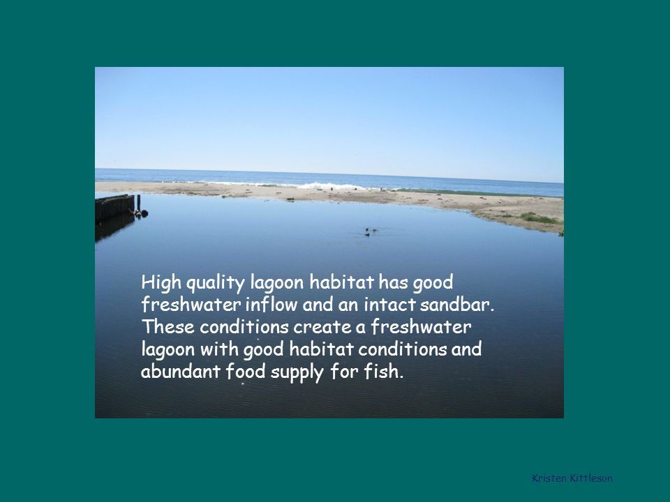 High quality lagoon habitat has good freshwater inflow and an intact sandbar.