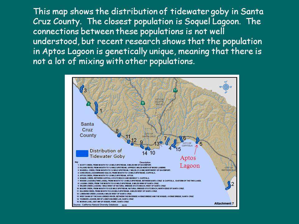 Aptos Lagoon This map shows the distribution of tidewater goby in Santa Cruz County. The closest population is Soquel Lagoon. The connections between