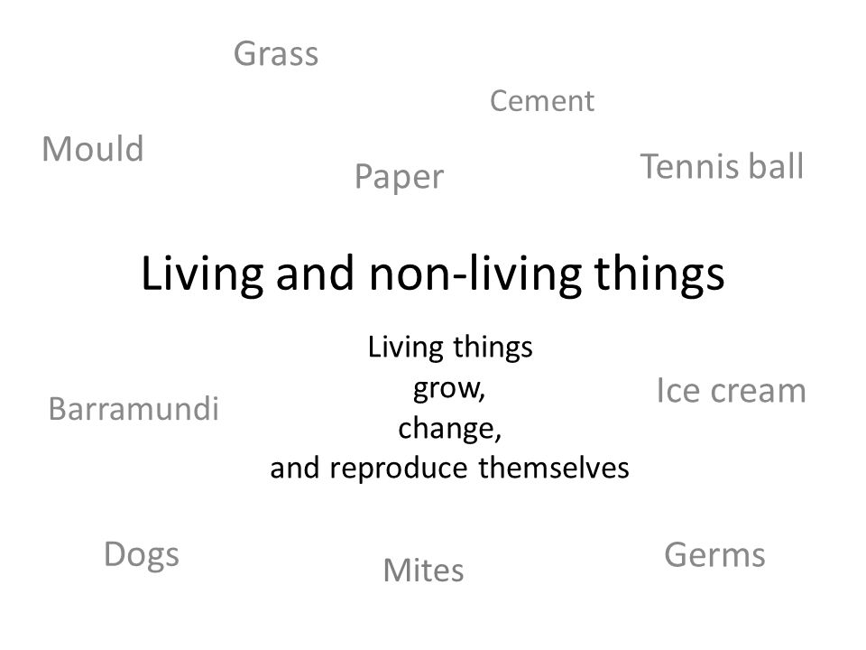 Dogs Living and non-living things Living things grow, change, and reproduce themselves Grass Paper Tennis ball Mites Germs Mould Barramundi Ice cream Cement