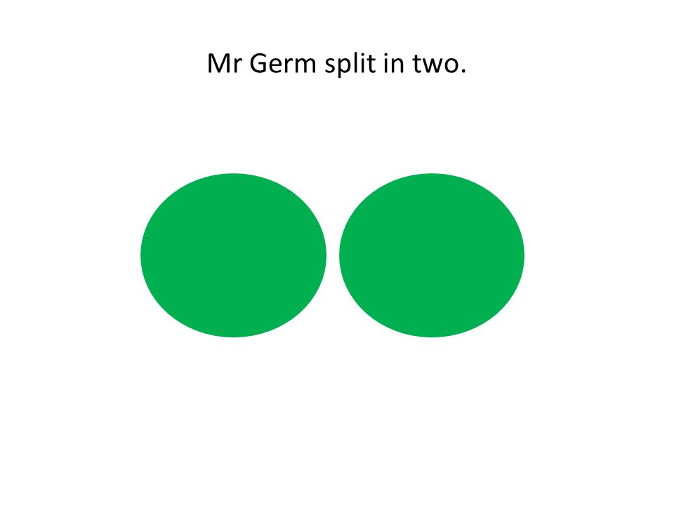 Mr Germ split in two.