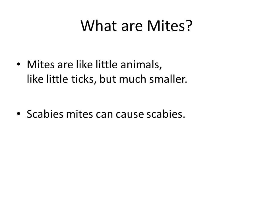 What are Mites. Mites are like little animals, like little ticks, but much smaller.