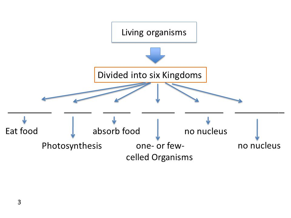 Living organisms Divided into six Kingdoms ________________________________________ Eat food absorb food no nucleus Photosynthesis one- or few- celled Organisms no nucleus 3
