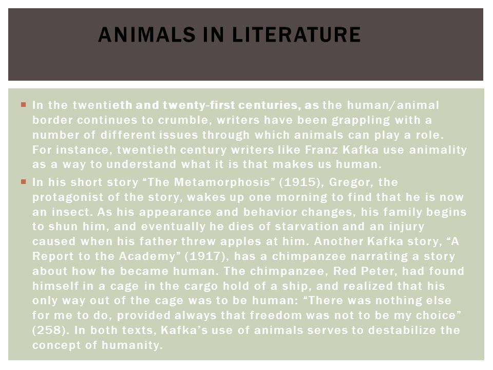  The twentieth century has seen a great deal of writing by women involving animals.