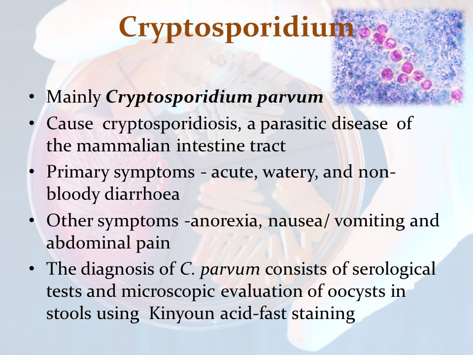 Cryptosporidium Mainly Cryptosporidium parvum Cause cryptosporidiosis, a parasitic disease of the mammalian intestine tract Primary symptoms - acute,