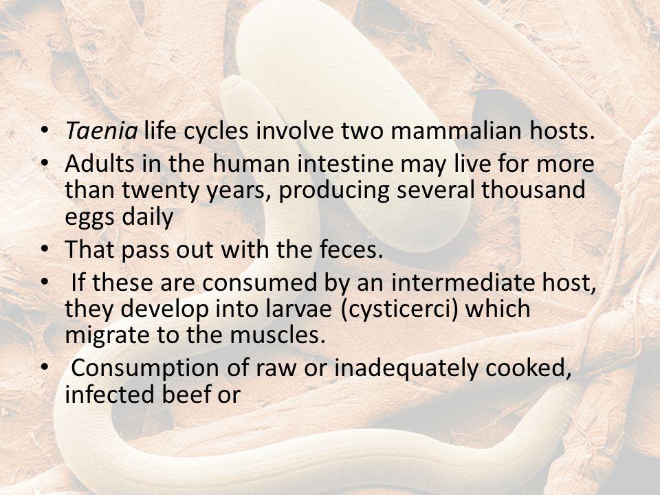 Taenia life cycles involve two mammalian hosts.