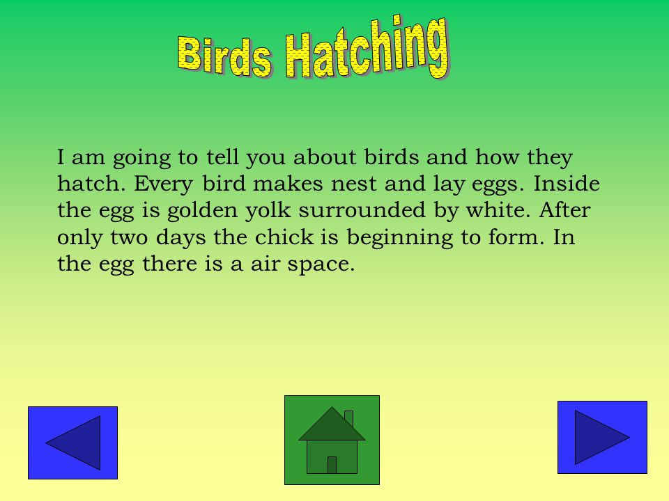 I am going to tell you about birds and how they hatch.