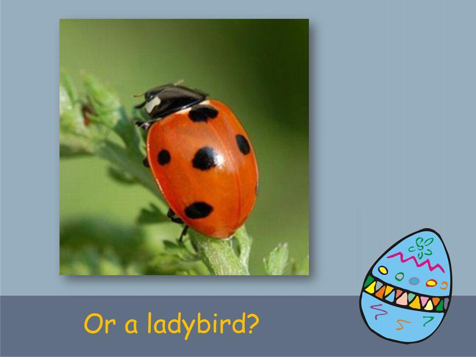 Or a ladybird?