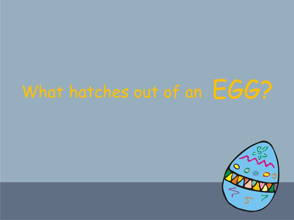What hatches out of an EGG