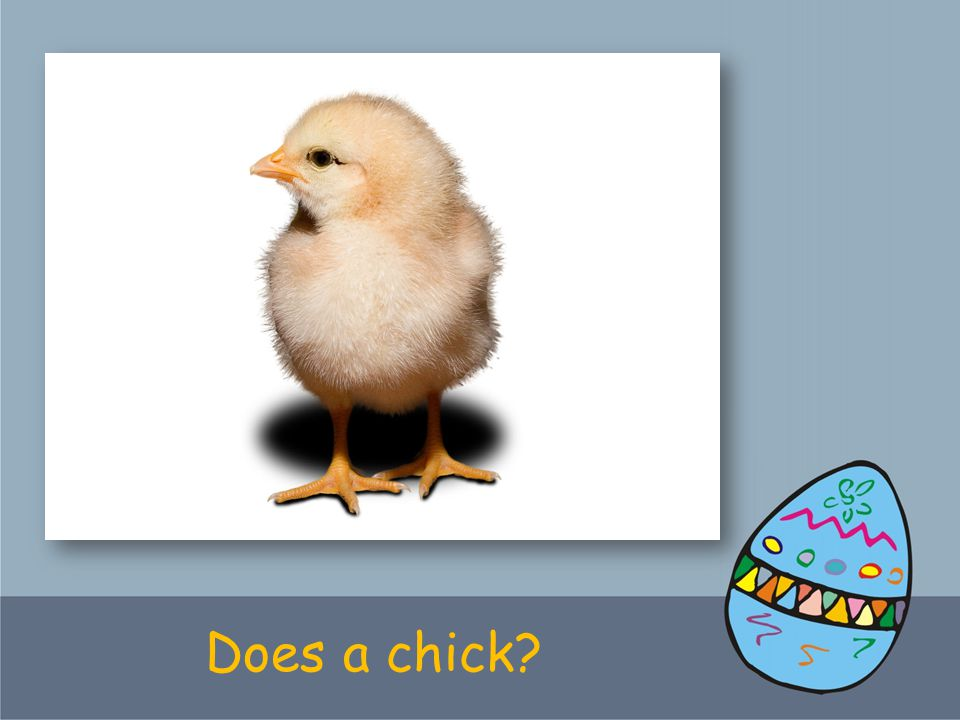 Does a chick