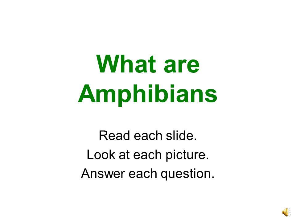 Newts are amphibians, too.