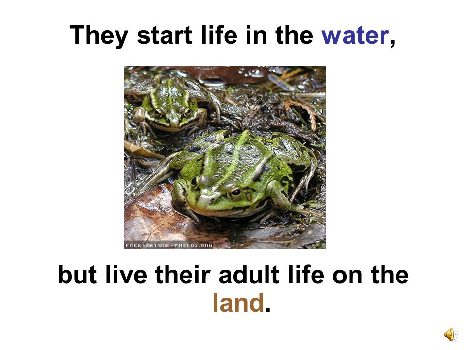 They start life in the water, but live their adult life on the land.