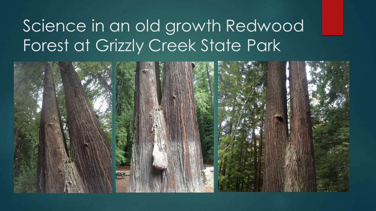 Science in an old growth Redwood Forest at Grizzly Creek State Park