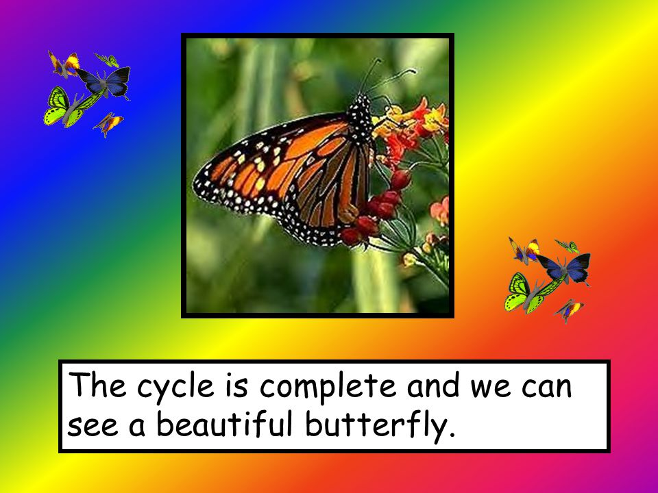 The cycle is complete and we can see a beautiful butterfly.