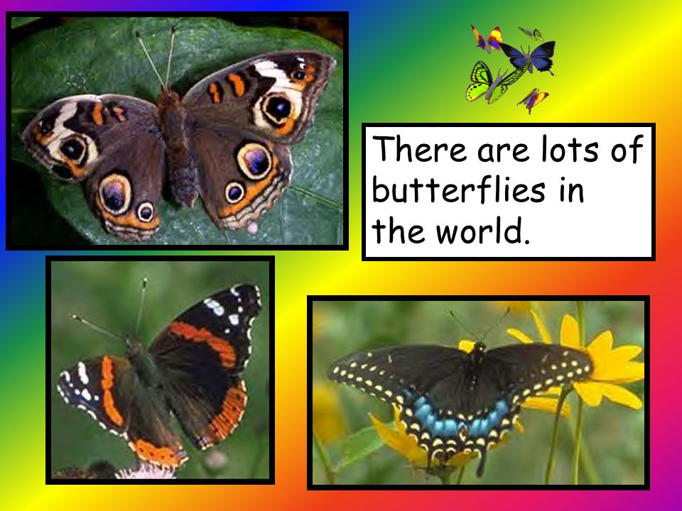 There are lots of butterflies in the world.