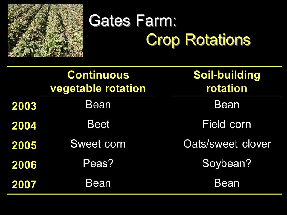Gates Farm: Crop Rotations Continuous vegetable rotation Soil-building rotation 2003 Bean 2004 BeetField corn 2005 Sweet cornOats/sweet clover 2006 Peas Soybean.