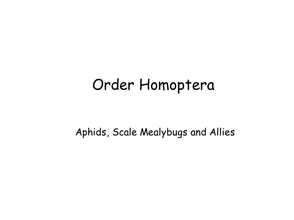 Order Homoptera Aphids, Scale Mealybugs and Allies