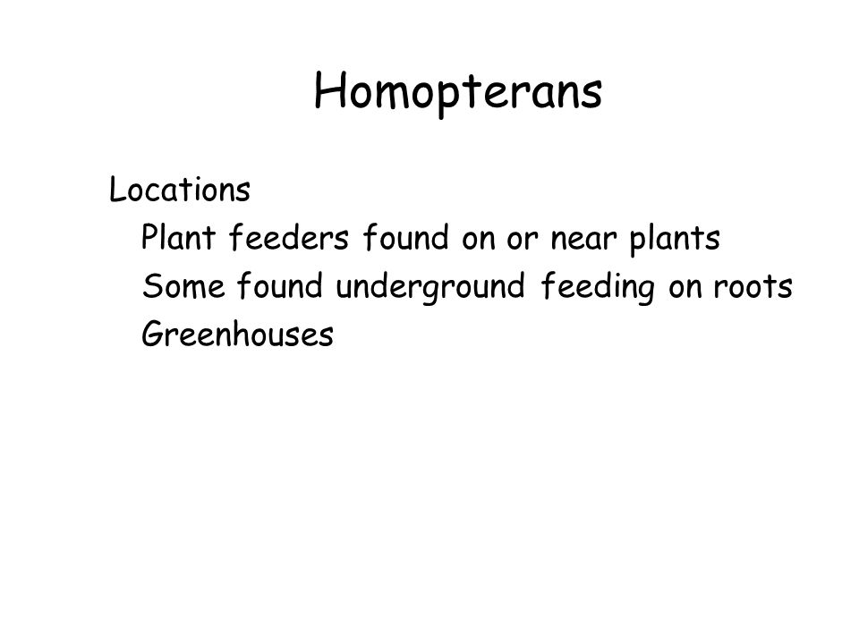 Homopterans Locations Plant feeders found on or near plants Some found underground feeding on roots Greenhouses