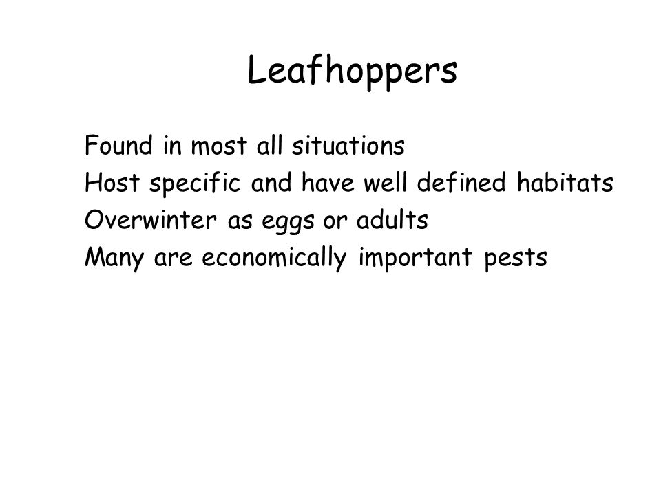 Leafhoppers Found in most all situations Host specific and have well defined habitats Overwinter as eggs or adults Many are economically important pes
