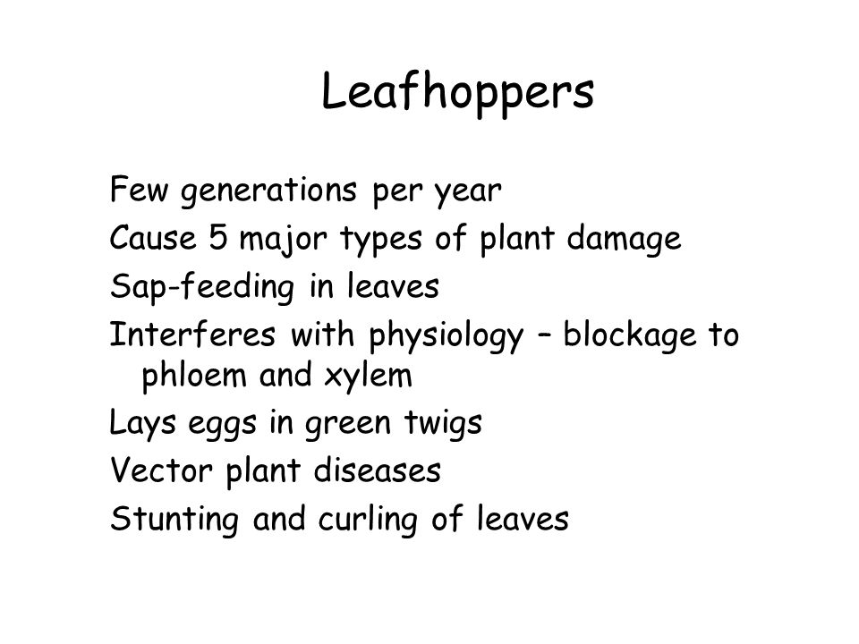 Leafhoppers Few generations per year Cause 5 major types of plant damage Sap-feeding in leaves Interferes with physiology – blockage to phloem and xylem Lays eggs in green twigs Vector plant diseases Stunting and curling of leaves
