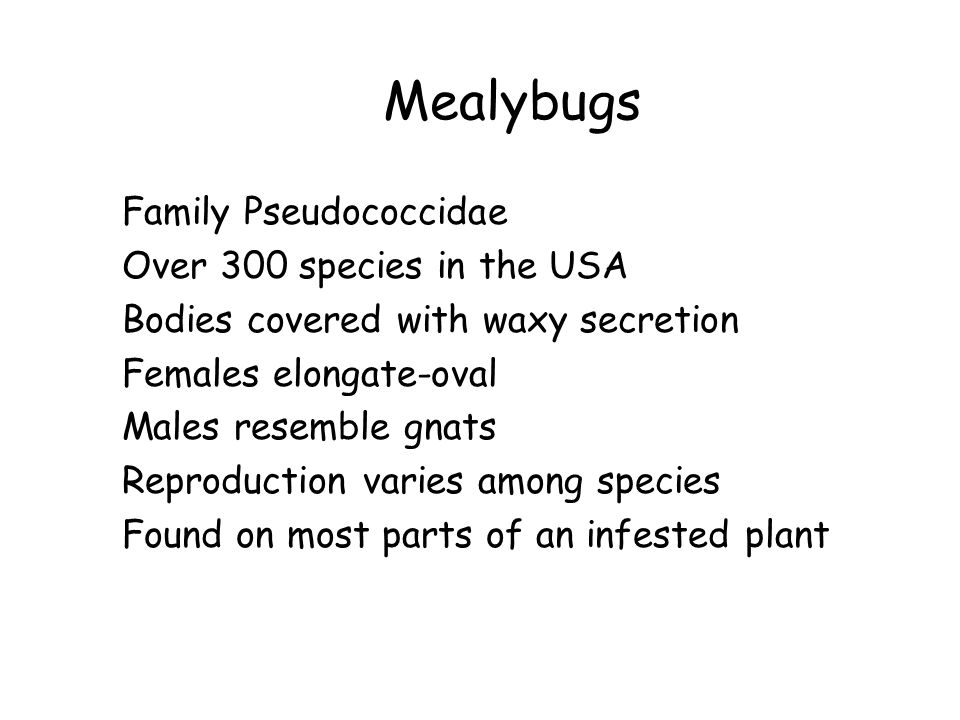 Mealybugs Family Pseudococcidae Over 300 species in the USA Bodies covered with waxy secretion Females elongate-oval Males resemble gnats Reproduction varies among species Found on most parts of an infested plant