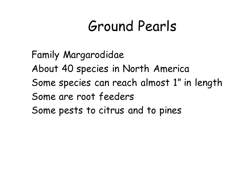 """Ground Pearls Family Margarodidae About 40 species in North America Some species can reach almost 1"""" in length Some are root feeders Some pests to cit"""