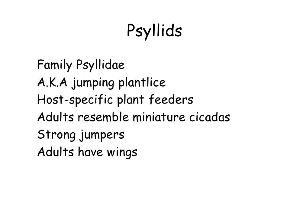 Psyllids Family Psyllidae A.K.A jumping plantlice Host-specific plant feeders Adults resemble miniature cicadas Strong jumpers Adults have wings