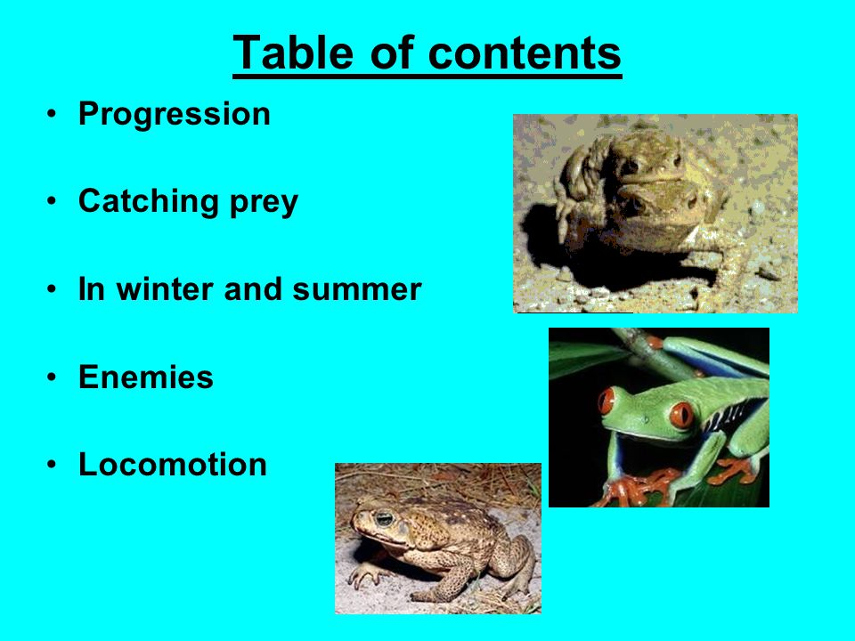 Table of contents Progression Catching prey In winter and summer Enemies Locomotion