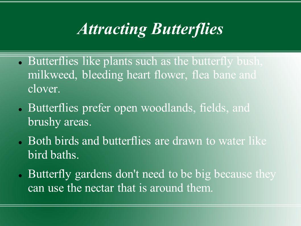 Attracting Butterflies Butterflies like plants such as the butterfly bush, milkweed, bleeding heart flower, flea bane and clover.