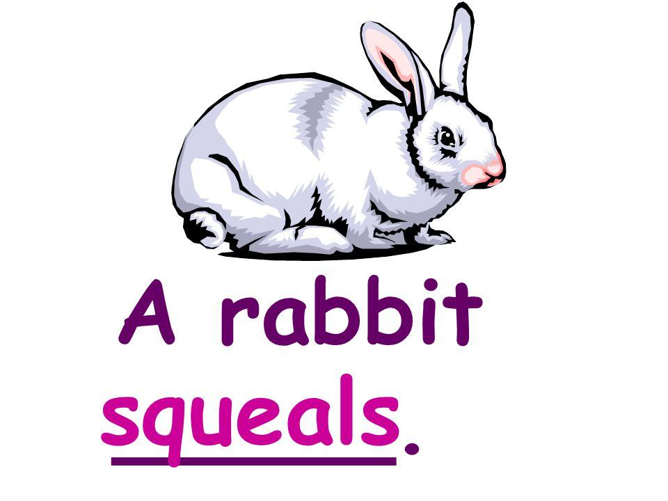 A rabbit _____. squeals