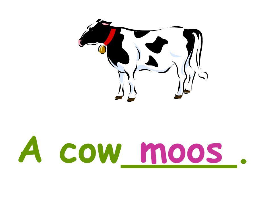 A cow_____.moos