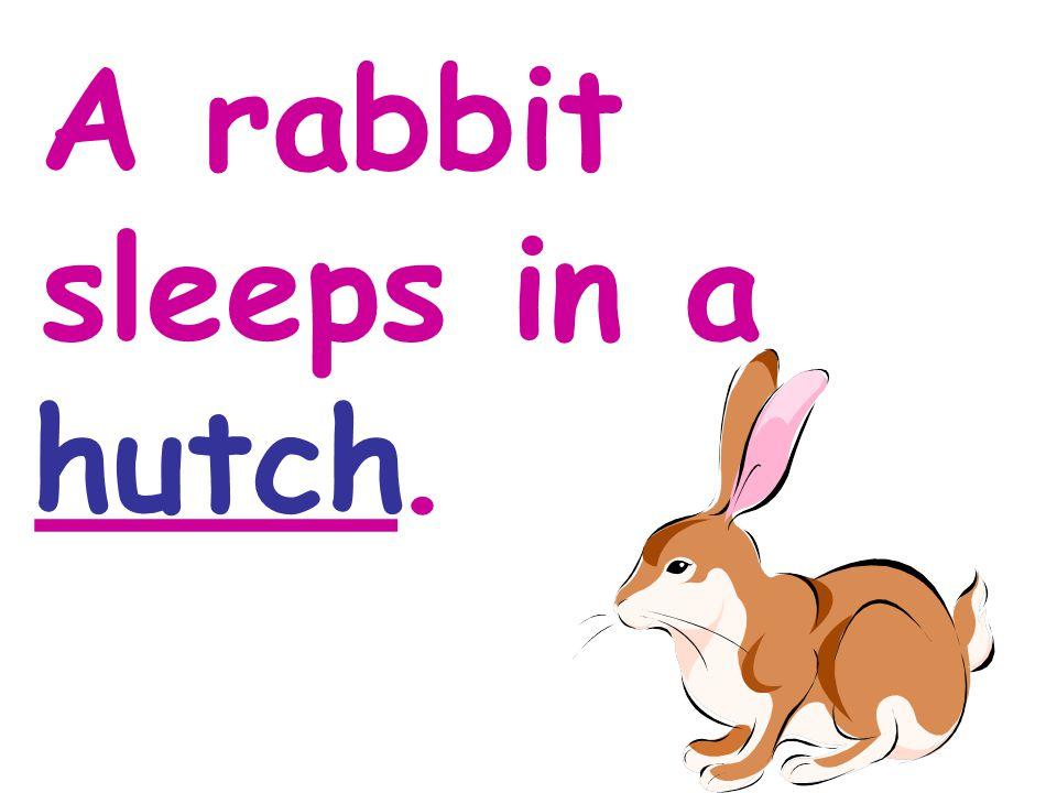 A rabbit sleeps in a ____. hutch