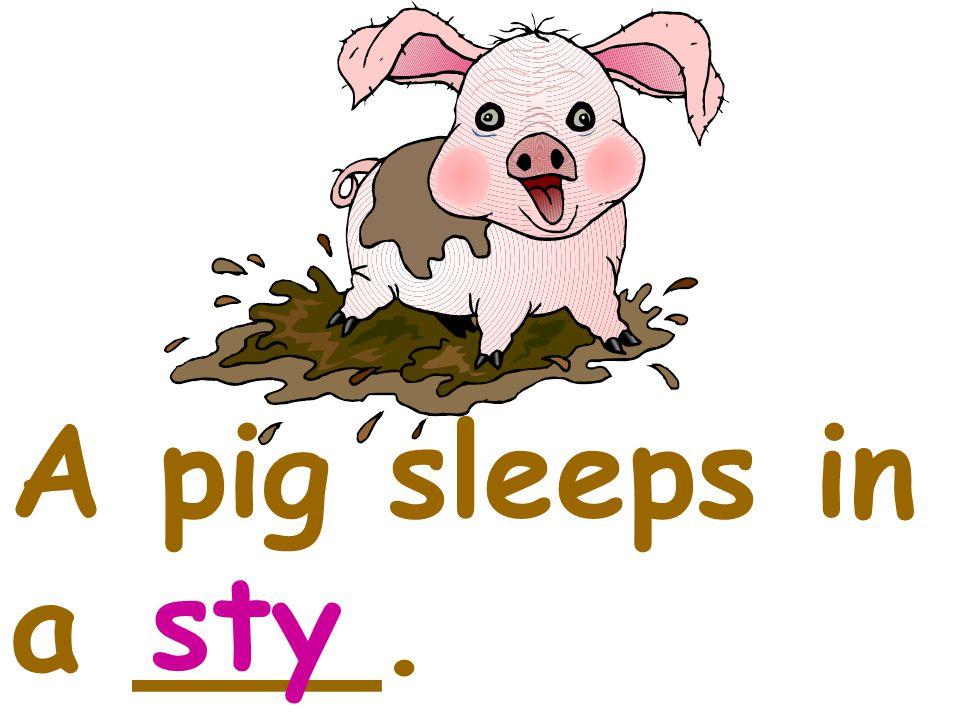 A pig sleeps in a ___. sty