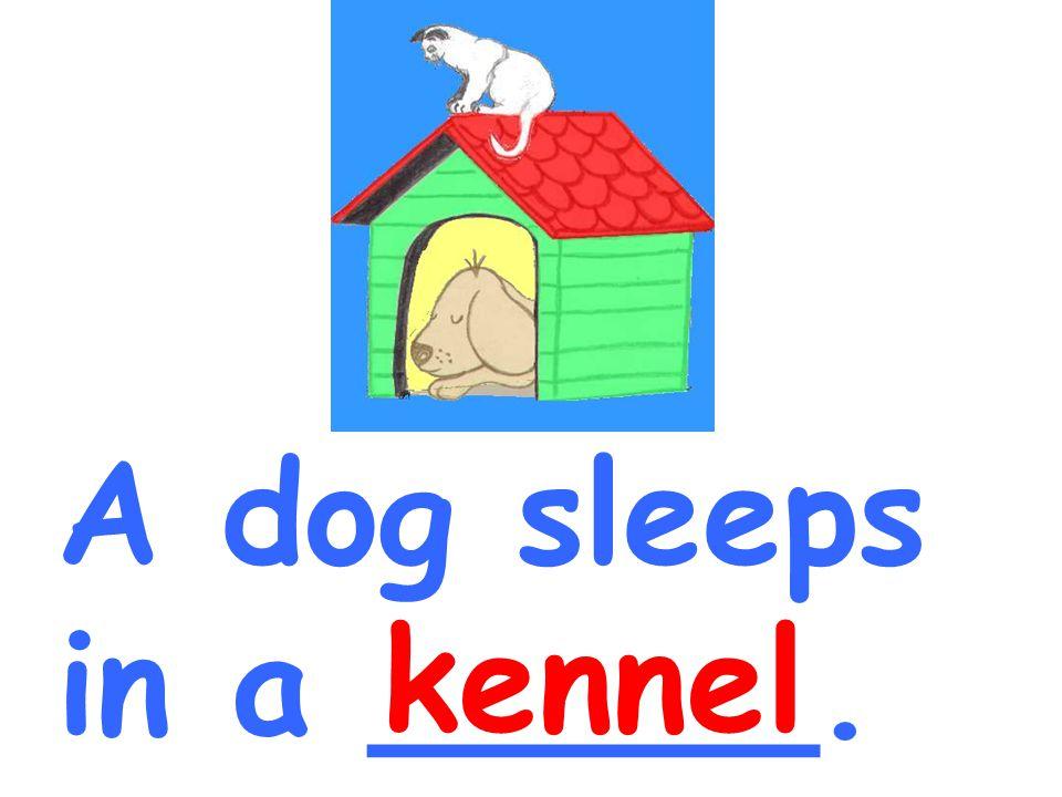 A dog sleeps in a _____. kennel