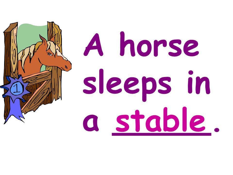 Hens sleep in a ____. barn
