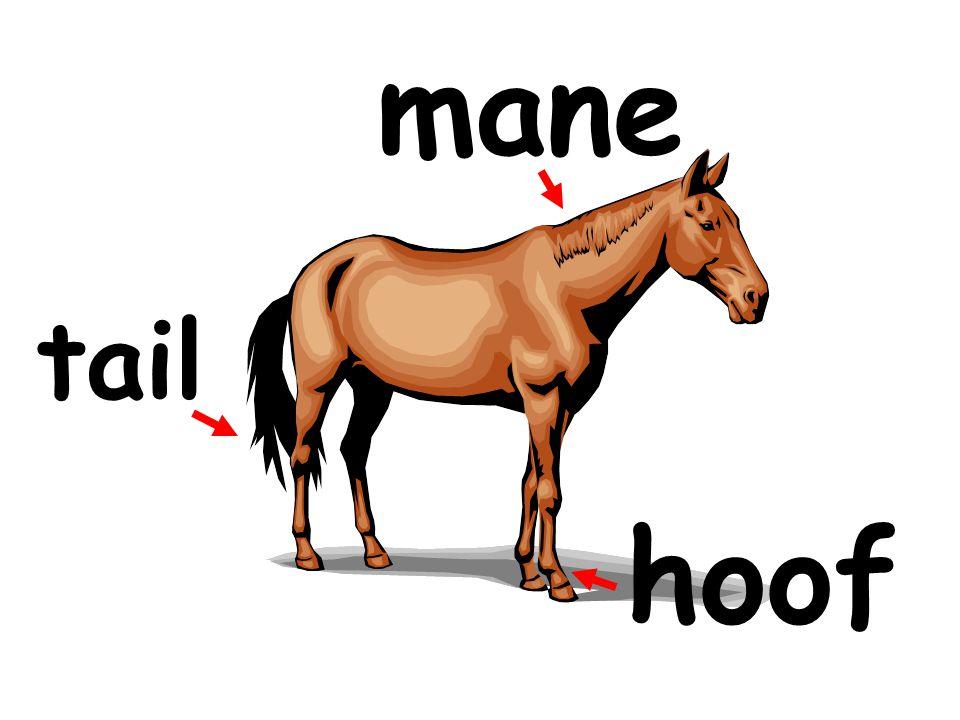 mane tail hoof