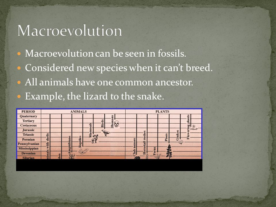 Macroevolution can be seen in fossils. Considered new species when it can't breed. All animals have one common ancestor. Example, the lizard to the sn
