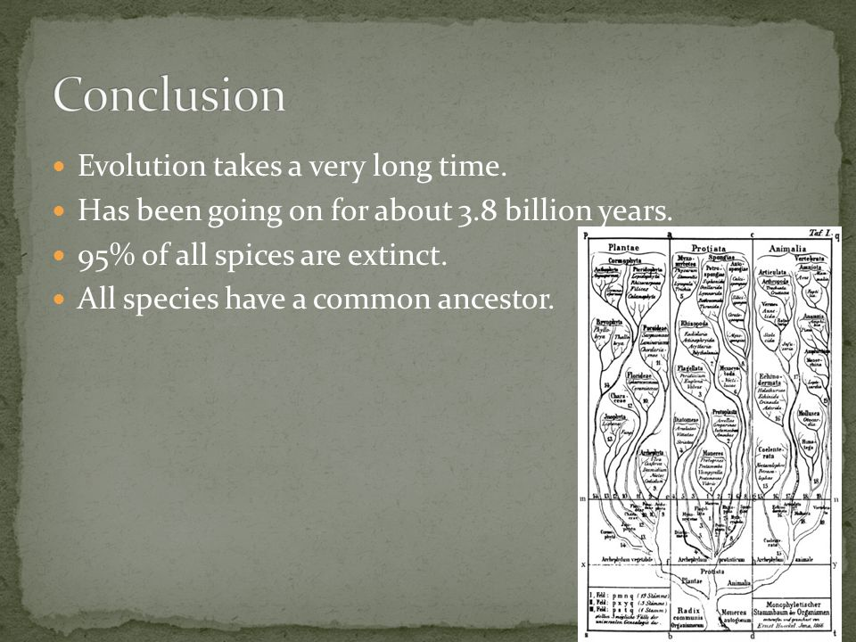 Evolution takes a very long time. Has been going on for about 3.8 billion years. 95% of all spices are extinct. All species have a common ancestor.