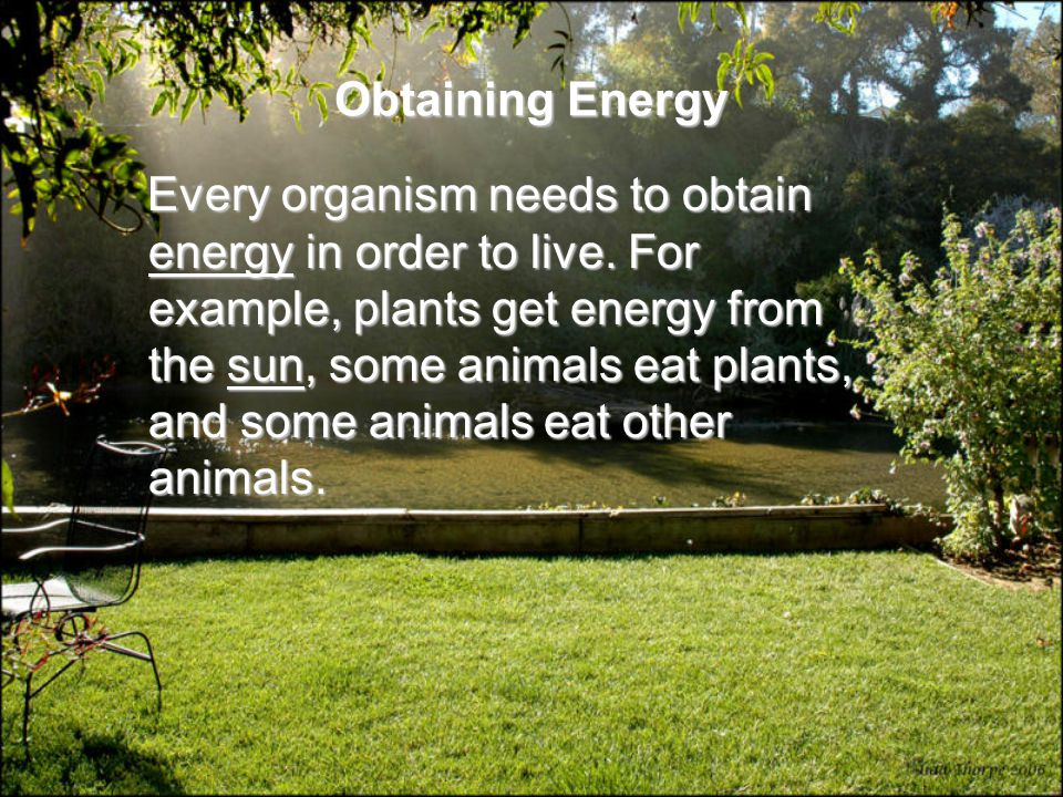Obtaining Energy Every organism needs to obtain energy in order to live.