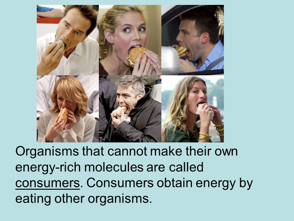Organisms that cannot make their own energy-rich molecules are called consumers.