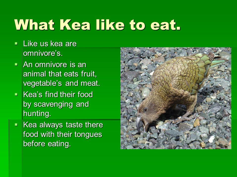 What Kea like to eat.  Like us kea are omnivore's.