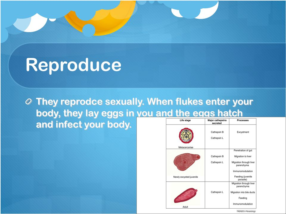 Reproduce They reprodce sexually.